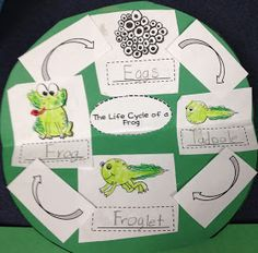 Firsties Rockin the Mullett!: Frog Life Cycle Craft and Writing Activity