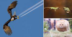 En la fotografía, una buena toma muchas veces requiere de una sincronización casi perfecta. En esta serie de fotos, estos animales fueron capturados en momentos divertidos y adorables, con un timing increíble. 1.  2.   3.   4.  5.   6.  7.  8. 9.   10.  11.   12.  13. 14.  15.  16.  17. 18.   19.  20.   Fuente: EMGN