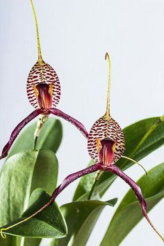 Orquídeas, exótica, peixe