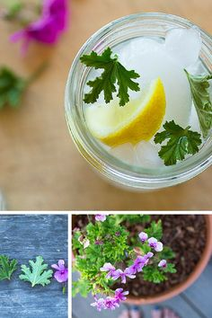 Grow your own scented geranium and other herbs for the perfect DIY cocktail garden. How to's, recipes and more.