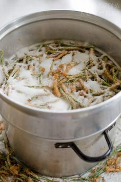 Syrop z pędów sosny II przepis | Sprawdzona Kuchnia Risotto, Health Tips, Deserts, Curry, Food And Drink, Herbs, Ethnic Recipes, Diet, Curries