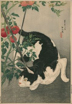 """Cat and Tomato Plant"" by Hiroaki Takahashi (Shotei), 1931"