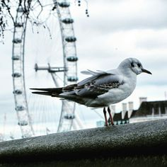 London Bird Eye  #London#Bird#Sky#LondoEye#UK#England#Photography #Artistic #Amazing #Shoot   My photo