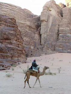 Lone Camel in Wadi Rum
