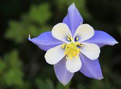 Flower on trail in Colorado