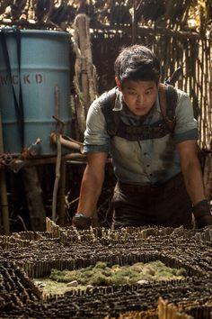 Ki Hong Lee- Minho- The Maze Runner