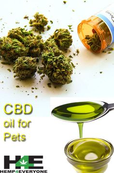 Hemp 4 Everyone produces CBD Oil for adults, dogs, cats and children. It can help treat insomnia, anxiety, pain, stress and more.