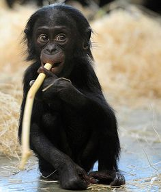Google Image Result for http://media4.onsugar.com/files/2010/10/41/3/192/1922243/1f1dadd9ac401341_chimpg.preview/i/Cute-Pictures-Wild-Animals.jpg