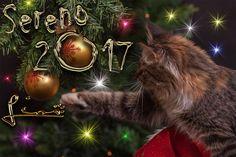 A tutti voi, amici e compagni di via, auguro un sereno anno nuovo. Grazie di tutto quello che mi avete dato :)  A presto Lio