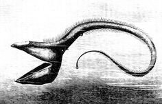Deep sea fish - Wikipedia