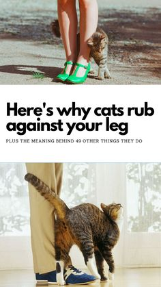 Here's what it means when cats do certain things. I never knew this! Super Funny, Really Funny, Animals And Pets, Funny Animals, Cat Behavior, Weird World, Funny Moments, Funny Things, Daily Memes