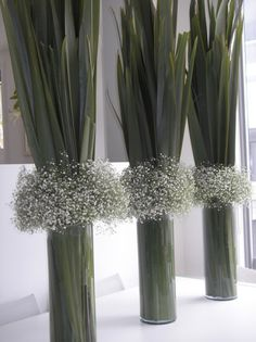 tall green leaves and Gypsophila