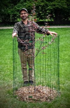 After I Graft A Tree I Install A Deer Cage Around The