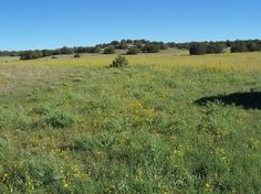 36 Best LandCentury com land for sale images in 2014 | Land