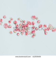 Pink Roses on white background. Minimalist fashion Details - stock photo