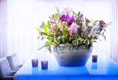 Orchids Thejoyofplants.co.uk