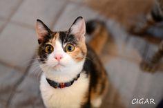 里親さんブログ萌をいーっぱい甘えさせてくださるご縁、大募集中♪ - http://iyaiya.jp/cat/archives/69299