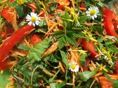 WILD PLANT FORAGER - Green salad with wild edibles from our backyard. Check out the recipe.