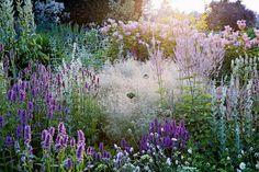 piet oudolf - native perennials : deschampsia purple . lilac . veronica / background : pink flowers (filipendula rubra magnifica)