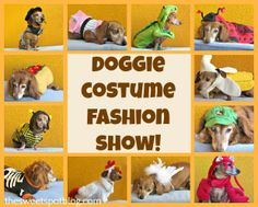 Dog Halloween Costumes by The Sweet Spot Blog http://thesweetspotblog.com/dog-costume-fashion-show/ #dog #pets #costumes #halloween #dachshunds