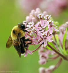 Want to attract more bees to do your pollination dirty work? Plant a variety of crops you both can enjoy.