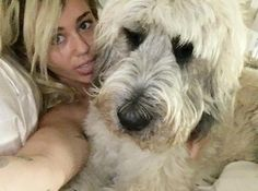 """MILEY CYRUS The Voice coach lounges with one of her many pets, writing, """"A coach to 12 artists. A mother to 7 dogs 2 pigs 3 1/2 cats (long story) 2 mini horsies 4 fish & a partridge in a pear tree. WATCH THE VOICE TONIGHT AT 8/7c ON NBC!!!"""" Instagram"""