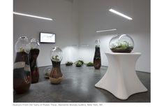 Paula Hayes Terrarium Display, Marianne Boesky Gallery, New York, NY Terrarium Plants, Glass Terrarium, Succulent Terrarium, Popsugar, How To Make Terrariums, Eco Architecture, Carnivorous Plants, Vase, Glass House