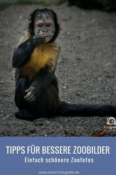 Tipps für bessere Zoobilder - Einfach schönere Zoofotos machen.
