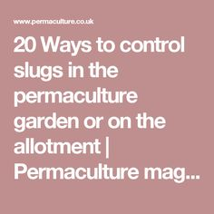20 Ways to control slugs in the permaculture garden or on the allotment   Permaculture magazine