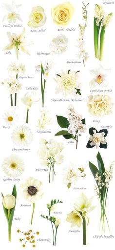 "Flower names by Color Have you ever found a picture of a bouquet and wondered, ""What is that flower?"" Here is a collection of flower names sorted by color. A few bouquet examples are at the bottom and so… Types Of White Flowers, White Wedding Flowers, Colorful Flowers, Beautiful Flowers, Wedding White, Bridal Flowers, Different Flowers Types, Exotic Flowers, Green Flowers"