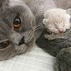 How precious is this photo with little baby nestled closely with its mom?  Mom's look is also a look of contentment.  I just love this!  All babies are so beautiful and adorable!!~Kathy :) <3