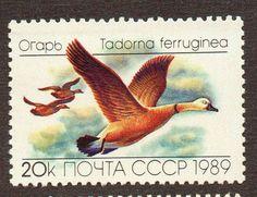 (3385) selo da russia 1989 fauna aves patos - novo