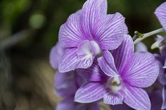 Flores, Orquídea, Natureza