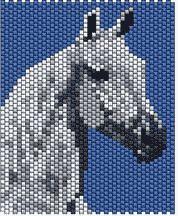 White Horse Head by Lynn Cassels-Caldwell