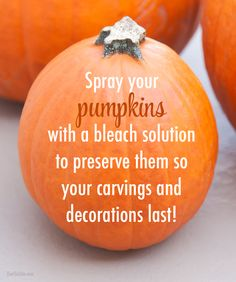 Make a simple bleach solution (1 part bleach to 10 parts water) and put it in a spray bottle. Spray your pumpkins all over before carving and then give them a light spray every other day or so. The bleach kills off the bacteria that would otherwise rot the pumpkin faster, allowing you to enjoy your holiday decor a bit longer!