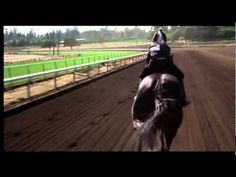 Highly acclaimed Friesian Stallion, SPECTACULAR, JAW-DROPPING - YouTube