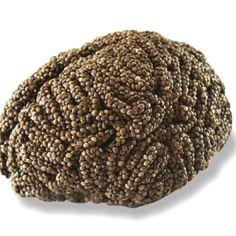 Hemp seeds = brain food