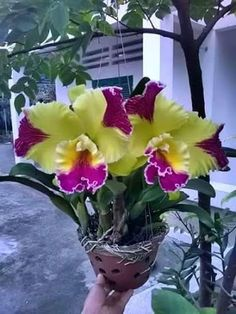 exotic flowers blue with pink veins Unusual Flowers, Rare Flowers, Flowers Nature, Amazing Flowers, Beautiful Flowers, Orchids Garden, Orchid Plants, Orchid Seeds, Flower Seeds