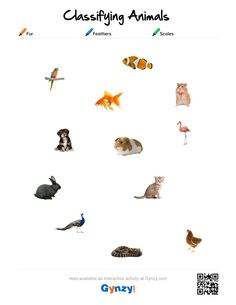 Teaching with help of the interactive whiteboard in a simple and effective way Classifying Animals, Animal Fur, Head Start, Worksheets, Feathers, Pdf, Activities, Keys, Knowledge