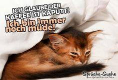 Lustigr Spruch über Müdigkeit und Kaffee mit schlafender Katze