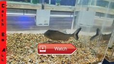 😸 NEW PET FISH FEEDING made BLOODY MESS Identify All Species Challenge 🐶 I get a few new fish for my pond while Shamu nearly rips my hand…