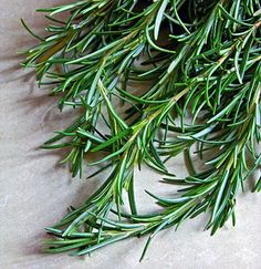 """Rosemary - One of the Oldest Healing Herbs Recorded.  I just love the nickname """"dew of the sea""""."""