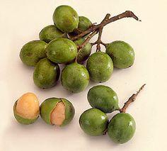 Mamoncillo, ein Obst aus Kuba