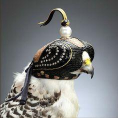 鷹狩りの鷹(ハヤブサ)に被せる目隠しが素敵だと話題に - Togetterまとめ