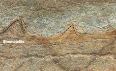 Fossils Suggest Life on Earth Is Much Older Than We Thought | Mental Floss