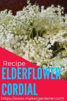 Elderflower cordial making it at home - Maker gardener