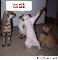 Funny cats playing isfunny.net