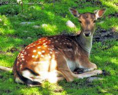 Kuusipeura Kangaroo, Animals, Animales, Animaux, Kangaroos, Animais, Animal