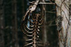 "douglaswbacon: ""Found on a hike Fowlerville, Mi """