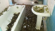 Thousands of radiated tortoises discovered inside of a Madagascar home Madagascar, Artificial General Intelligence, Rare Species, Tortoises, House Smells, Top Funny, News Website, Animals, Bad Neighbors